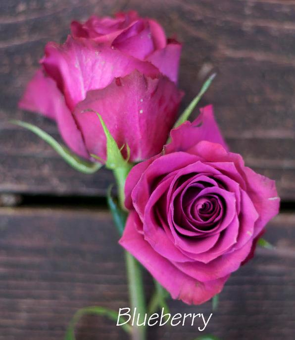 Purple rose blog
